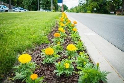 Midland Blooms